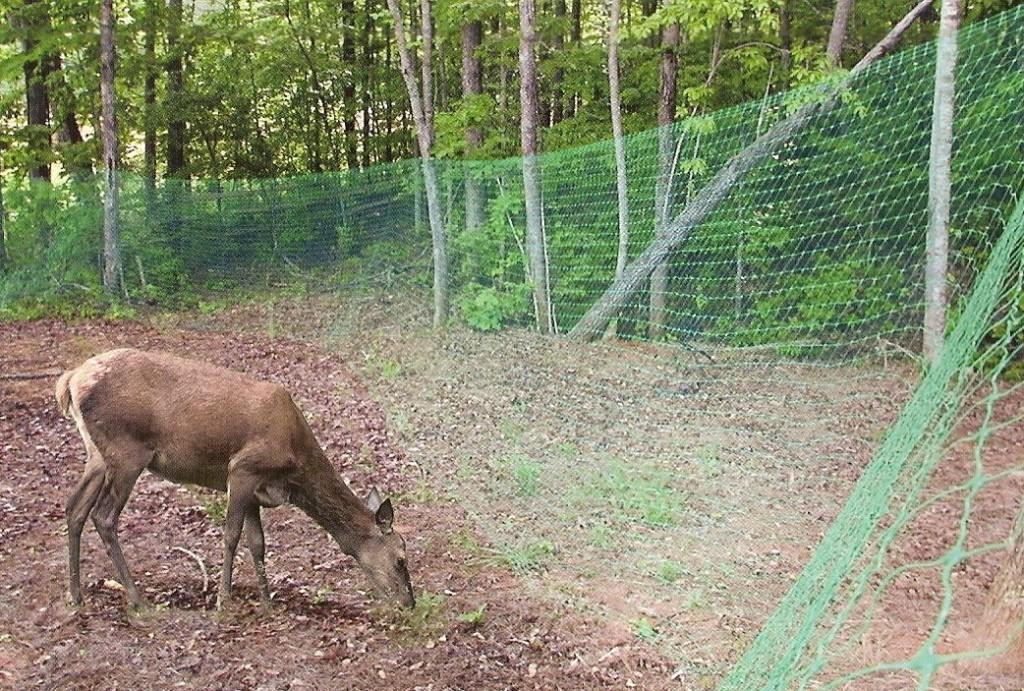пластиковая сетка рабица для выгула животных или вольера