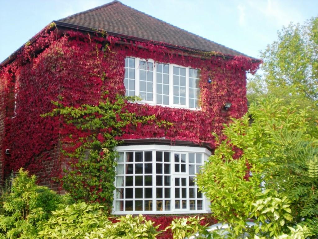 Осенний дом, заросший плющом