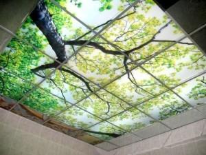 Стеклянный потолок с рисунком дерева