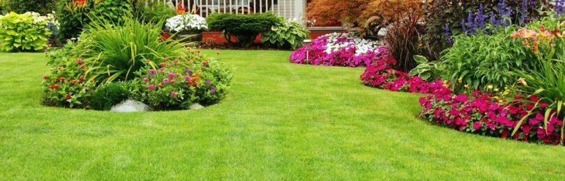 Как сделать красивый газон на участке