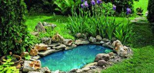 Как вырастить экзотические деревья и сделать пруд в саду