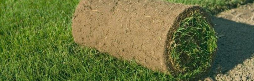 Разбираем особенности газона и ухода за ним