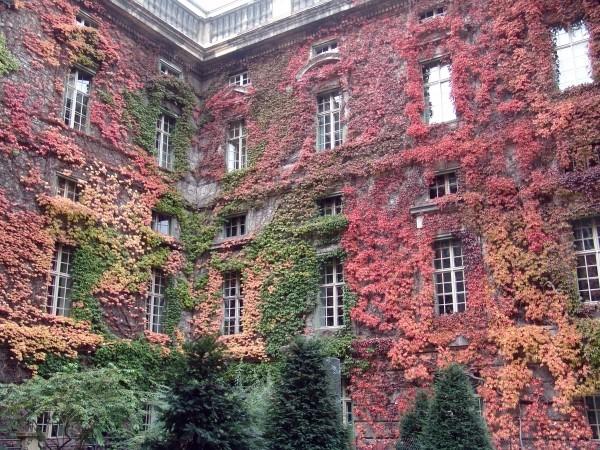 Вертикальное озеленение фасада дома