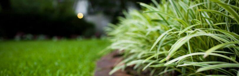 Как создать красивый и практичный газон своими руками