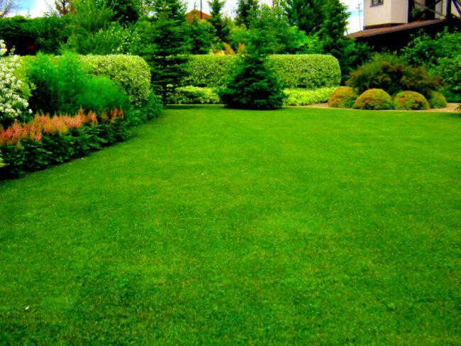 красивый газон в загородном доме